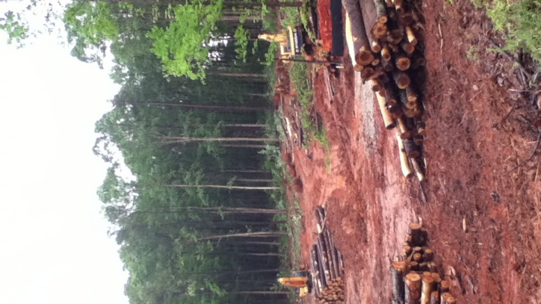 """Leesville has maintained a decent amount of woodland around the school since its opening. Unfortunately, as Raleigh's development rate increases, more trees continue to be cut down to make room for """"progress""""."""