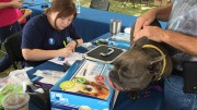 Dogs are taken great care of at the microchipping sponsored by AKC Reunite. The price of microchipping at Responsible Dog Ownership Day is to good to miss and owners from all over North Carolina meet up to take advantage of the event.